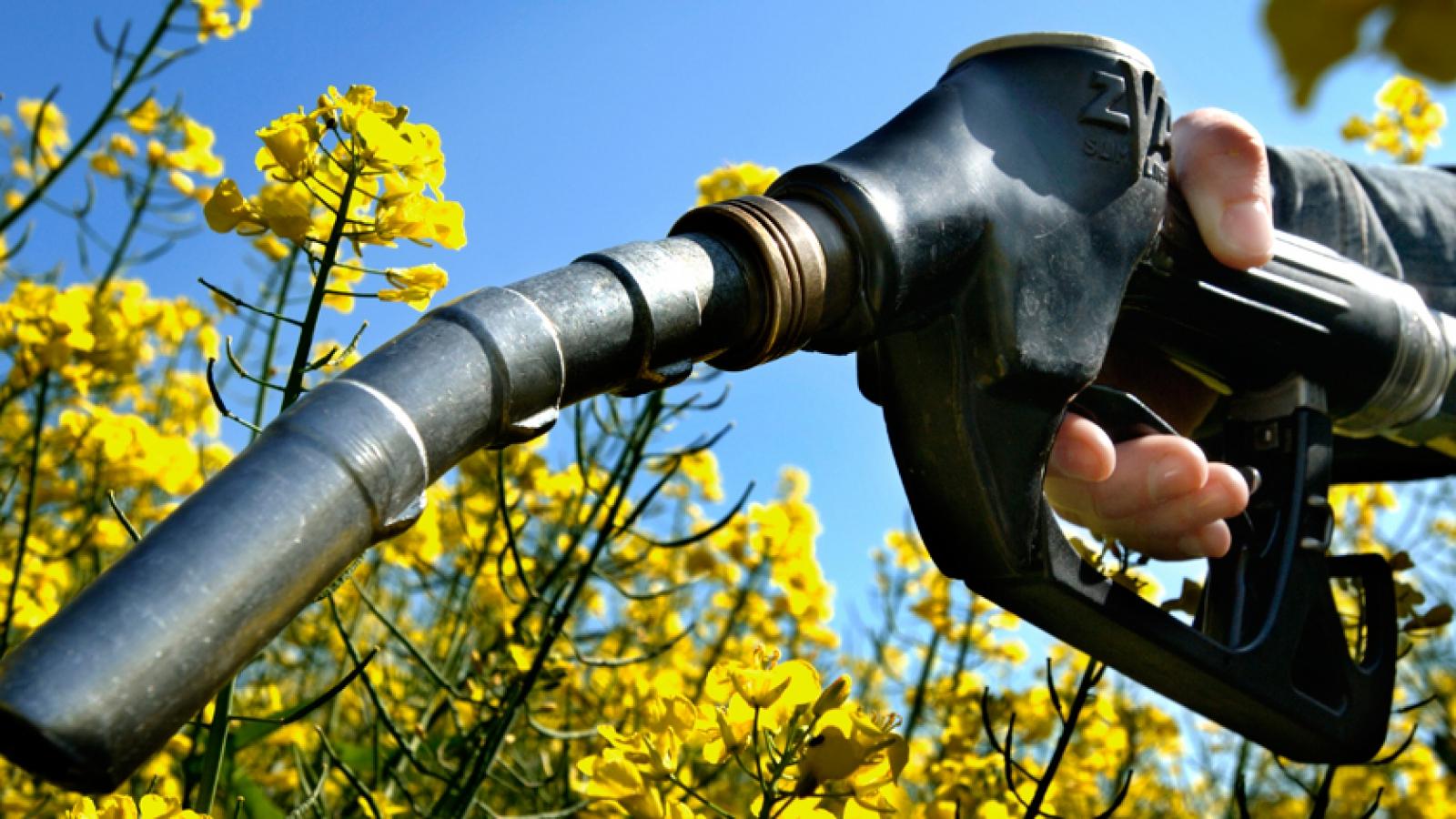 biofuelul-provoaca-pierderea-biodiversitatii