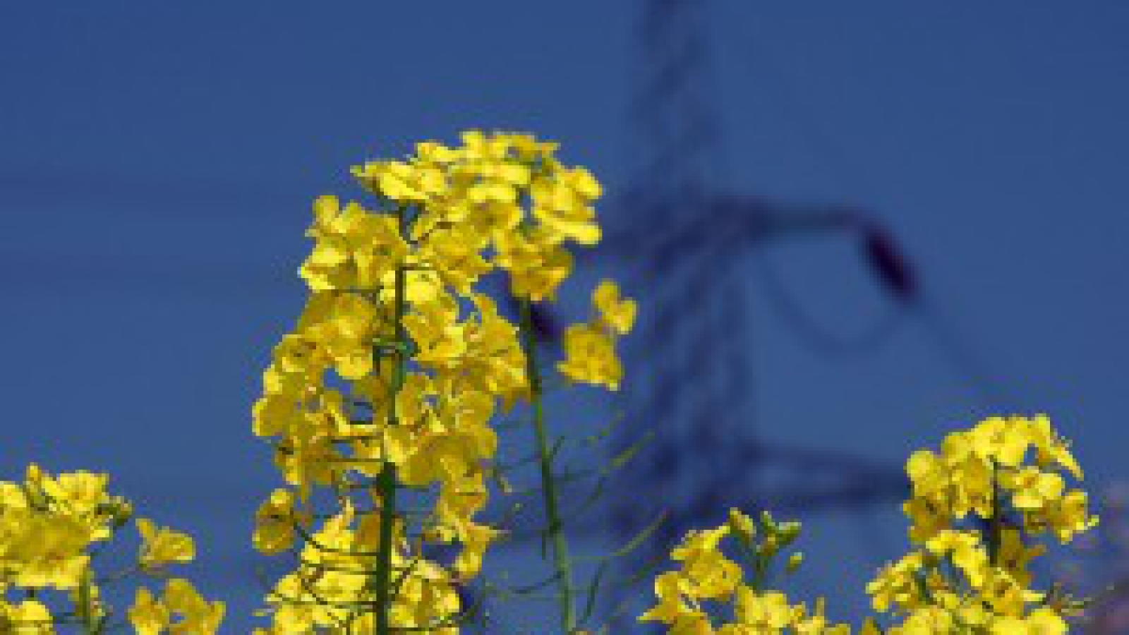 biofuel-lee-jordon-flickr-300x225